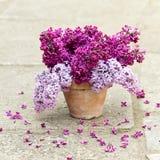 Keramischer Topf mit einer Niederlassung der lila Blume Lizenzfreie Stockfotos