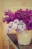 Keramischer Topf mit einer Niederlassung der lila Blume auf hölzernem Hintergrund Lizenzfreies Stockfoto