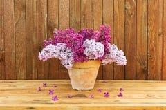 Keramischer Topf mit einer Niederlassung der lila Blume auf hölzernem Hintergrund Lizenzfreie Stockfotos