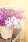 Keramischer Topf mit einer Niederlassung der lila Blume auf hölzernem Hintergrund Lizenzfreie Stockbilder