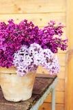 Keramischer Topf mit einer Niederlassung der lila Blume auf hölzernem Hintergrund Stockbild