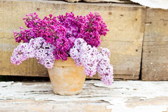 Keramischer Topf mit einer Niederlassung der lila Blume auf hölzernem Hintergrund Stockfotografie