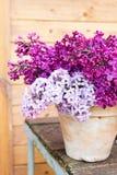Keramischer Topf mit einer Niederlassung der lila Blume auf hölzernem Hintergrund Stockfoto