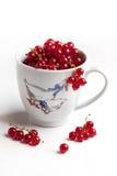 Keramisches Cup mit nasser roter Johannisbeere Lizenzfreies Stockbild