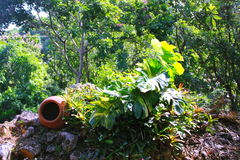 Keramisk kruka i djungel Royaltyfri Fotografi