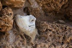 Keramisk maskering med taggen på den groteska väggen Royaltyfria Foton