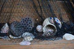Keramiska krus- och lotusblommafrukter med skal i ingreppet Arkivfoto