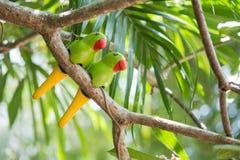Keramiska papegojor royaltyfria bilder