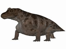 Keratocephalus - 3D Dinosaur Stock Photos