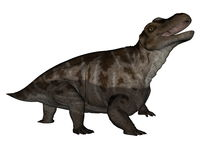 Keratocephalus dinosaur roaring - 3D render Royalty Free Stock Photography