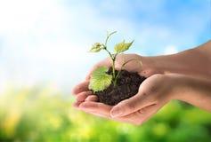 Åkerbrukt begrepp, liten växt i hand Arkivbilder