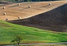 Åkerbrukt landskap med sugrörbaler Arkivbild