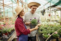 Kerel en meisjes de tuinlieden in een strohoeden houdt en bekijkt de pot met bloem in serre op een zonnige dag royalty-vrije stock foto