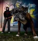 Kerel op een gang met de hond bullmastiff royalty-vrije stock afbeelding