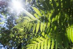 Kerikeri Nouvelle-Zélande Photos libres de droits