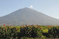 Kerinci vulkan Arkivbild