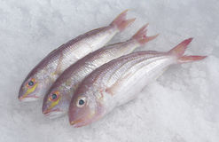 Kerisik fish Stock Images