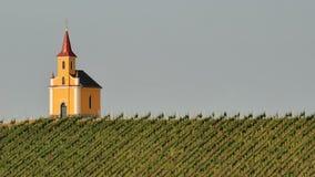 Kerk in wijngaard no.2 Stock Foto's