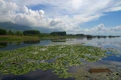 Kerkini jezioro podczas wczesnej wiosny z wodną lelują Zdjęcie Royalty Free