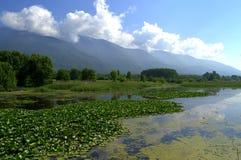 Kerkini lake,Greece Stock Image