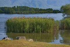 Kerkini lake at nord Greece Royalty Free Stock Photos