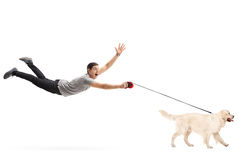 Kerl, der durch seinen Hund gezogen wird Stockbild