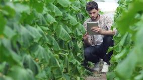 Kerl, der zwischen den grünen Reihen der Tablette sitzt stock video