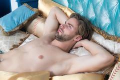 Kerl mit Bart und sexy Torso liegen auf Bett Stockfotografie