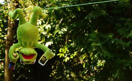Kermit the Frog Hang on the Wire Royalty Free Stock Images