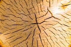 Kern gesägtes Holz der Birkennahaufnahme Stockbild