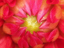 Kern van een bloem Royalty-vrije Stock Afbeelding