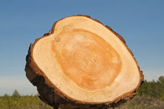Kern van een boom Stock Afbeeldingen