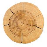 Kern van een houten die logboek op een witte achtergrond wordt geïsoleerd Hoogste mening Achtergrond, textuurreeks stock afbeelding