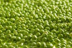 Kerne der grünen Erbsen Lizenzfreie Stockfotos