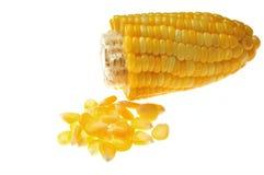 Kernel corn. Sweet whole kernel corn on white background royalty free stock photo