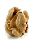 Kernel of a nut Stock Photography