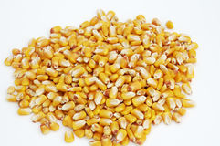 Kernels of Corn 3. Kernels of corn harvested in the fall Stock Photos