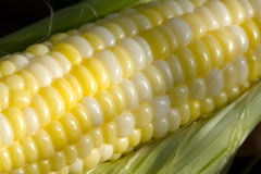 Kernels of Corn Royalty Free Stock Photography