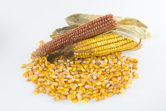 Kernels of corn in a pile with corn cob Stock Photo