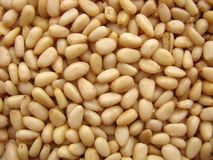 Kernels of pine nuts Stock Photography