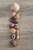 Kernels and seeds Royalty Free Stock Photos