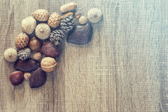 Kernels and seeds Royalty Free Stock Images