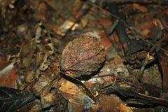 Kernobst, das auf dem Waldboden liegt stockbilder