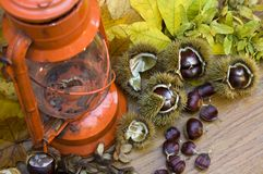 Kerosen lamp still life with Spanish Chestnuts Royalty Free Stock Image