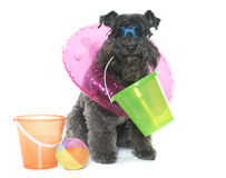 Kerry blue terrier and beach Royalty Free Stock Images