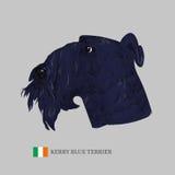 Kerry blue terrier dog portrait. Stock Photos
