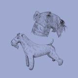 Kerry Blue Terrier-Hundeskizze Stockfoto