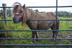 Kerry Bog Pony fotografia de stock