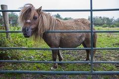 Kerry Bog Pony imágenes de archivo libres de regalías