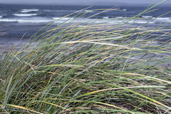 Kerry Ireland beale dune grass Stock Images